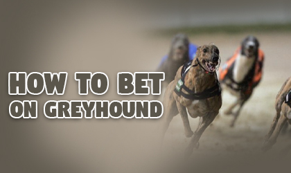 Tom greyhound online betting cryptocurrency logos software